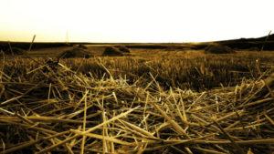 Przesłanki obniżenia czynszu w umowie dzierzawy